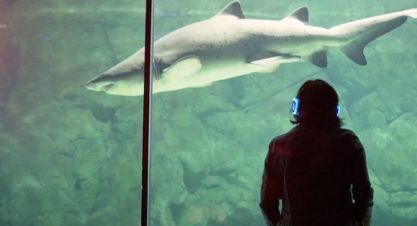 Tranquil Silent Disco Two Oceans Aquarium